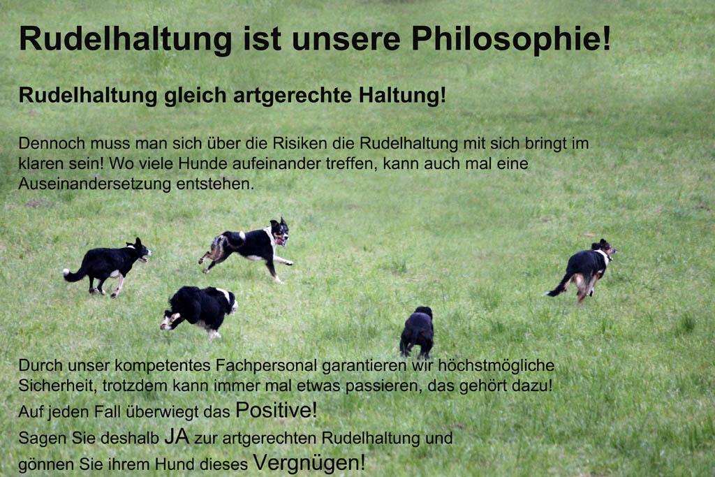 Rudelhaltung-ist-unsere-Philosophie2