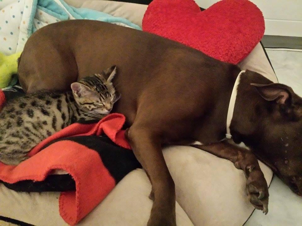 Angel mit neuem Freund schlafen