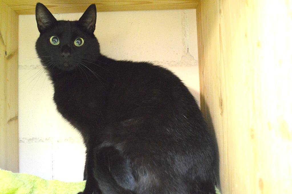 Sina Katze